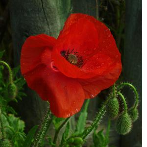 jadalne_kwiaty